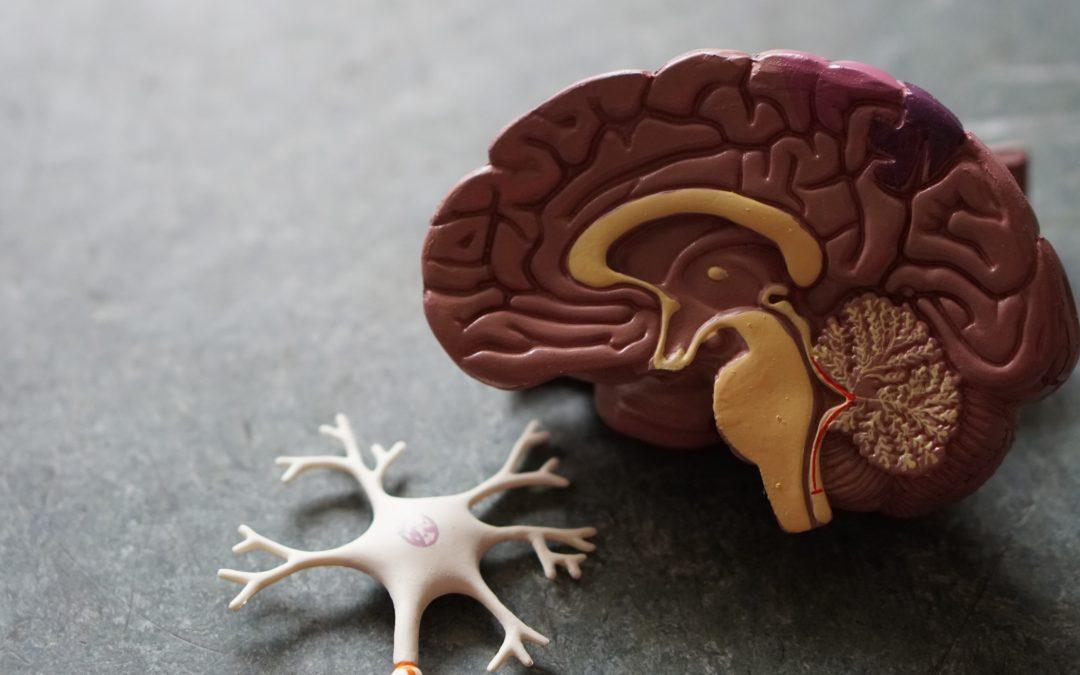Effexor Side Effects include Brain Damage